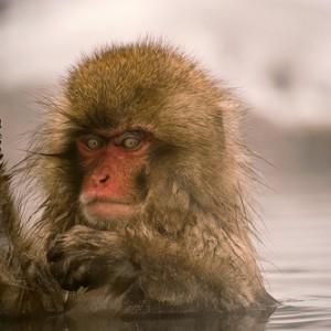 疲れが溜まったとき温泉に浸かると頭のなかがサッパリするたったひとつの理由+そうありたい欲求