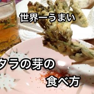 【農家直伝レシピ】世界一おいしいタラの芽の食べ方